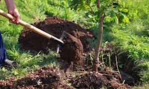 sadnica drva