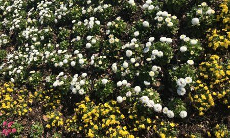 sadnice cvijeće