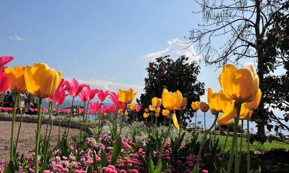 amerikanski vrtovi cvijeće