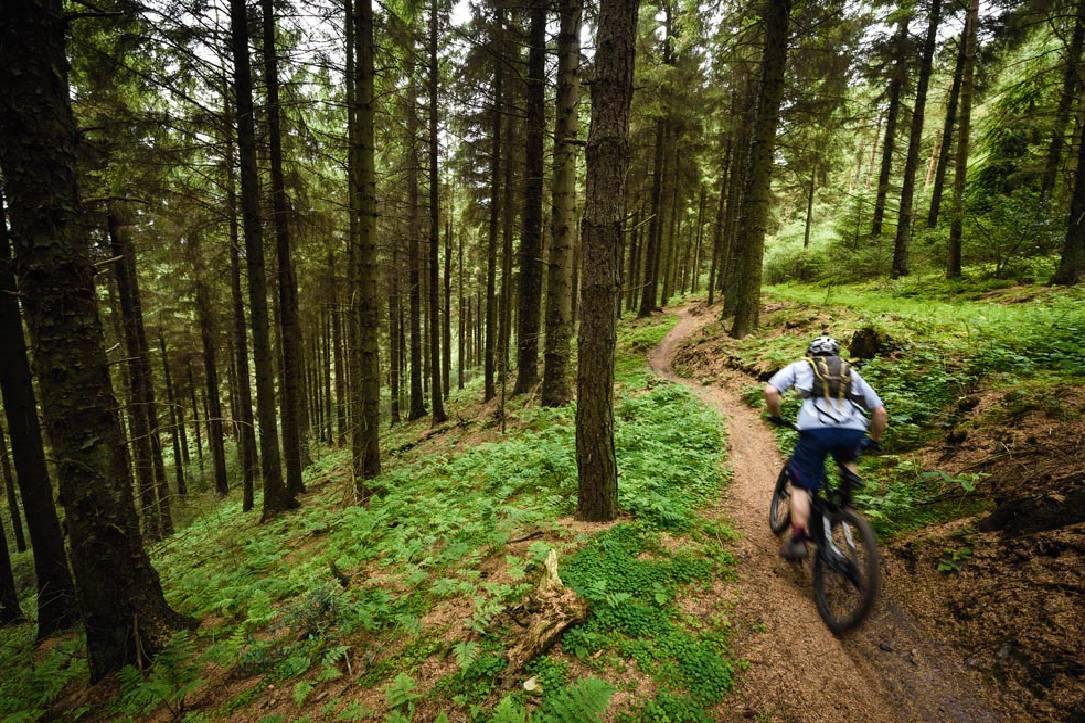 bicikla šuma mtb