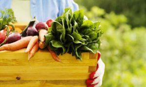 povrće eko sajam