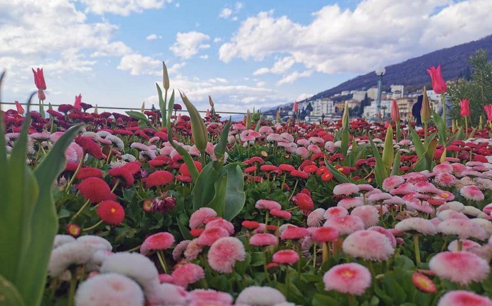 opatija proljeće cvijeće Smiljna Prpić