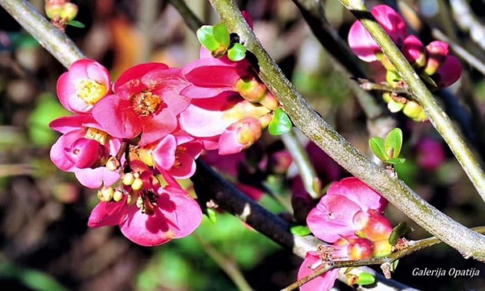 proljeće Smiljan Pripić