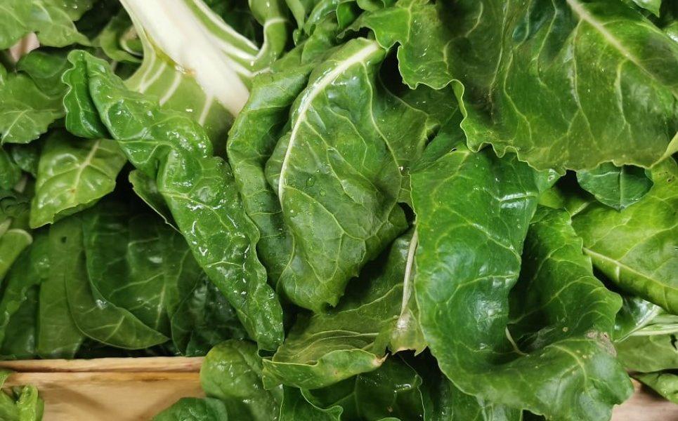 foto Smiljan Pprić blitva povrće