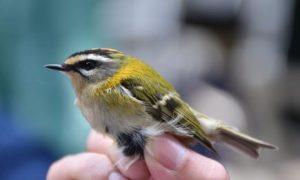 ornitološki kamp učka